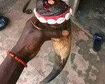 the-best-powerful-traditional-herbalist-in-nigeria2348055664179-small-5