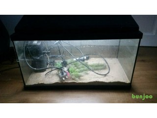 2 foot fish tank with heater, light, 2 filters, sand a few plants