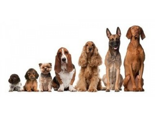 Home Comforts from Home Dog Boarding and Dog Walking Services