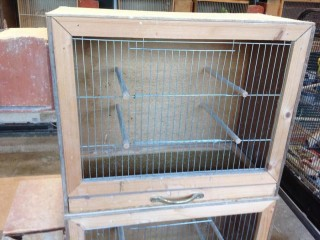 Budgies and breeding cages for sale