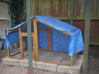 Rabbit/Guinea pig day hutch