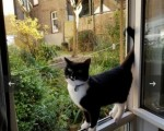 black-and-white-cat-paddy-is-missing-last-seen-on-the-31st-october-in-the-w11-area-small-0