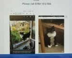 black-and-white-cat-paddy-is-missing-last-seen-on-the-31st-october-in-the-w11-area-small-1