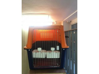 Dog travel kennel/crate/cage, plastic, 133X80x85cm, IATA standard,