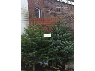 NON DROP Premium Christmas Trees For Sale