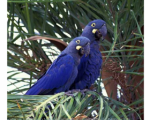 macaw-parrots-for-sale-small-1