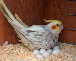 macow-parrot-and-eggs-small-0