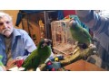 hahns-macaw-parrots-looking-for-a-good-home-small-1