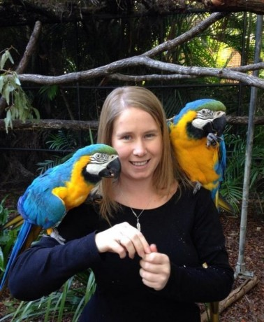 kids-freindly-and-lavable-blue-and-gold-macaw-parrots-big-1